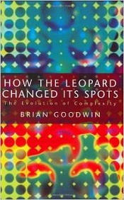 How The Leopard Changed Its Spots: Evolution of Complexity